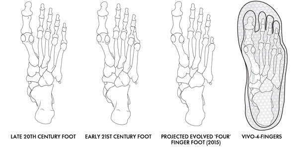 evolution-of-the-foot.jpg