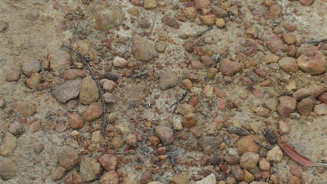 rocky 2.jpg