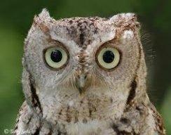 Owlrun